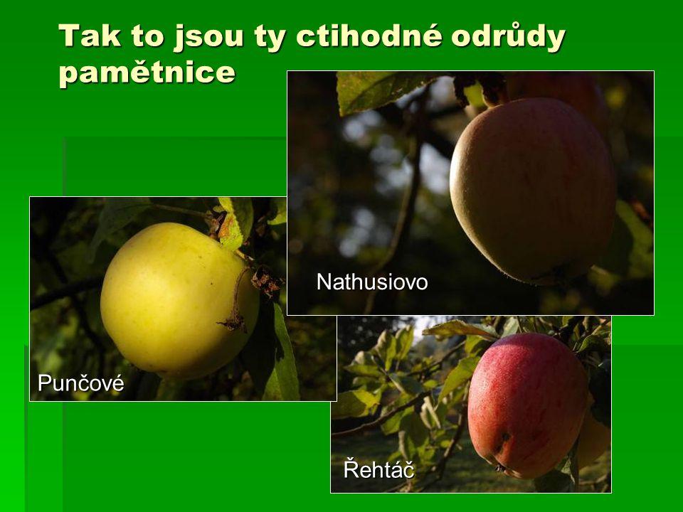 Tak to jsou ty ctihodné odrůdy pamětnice Punčové Řehtáč Nathusiovo