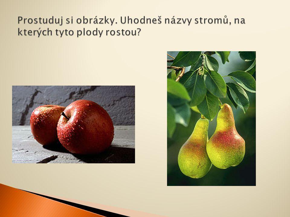  Zamysli se, které ovoce dozrává na podzim.  Které ovocné stromy máte na vaší zahradě