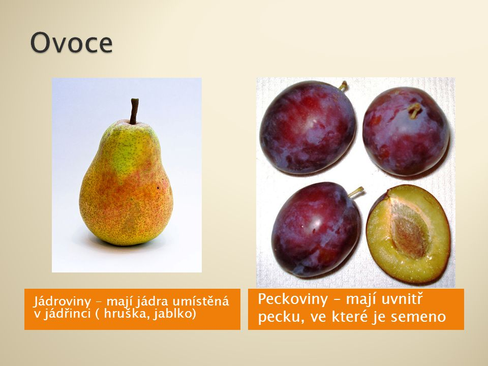 Jádroviny – mají jádra umístěná v jádřinci ( hruška, jablko) Peckoviny – mají uvnitř pecku, ve které je semeno
