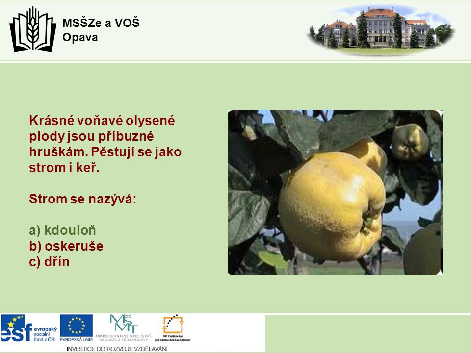 MSŠZe a VOŠ Opava Krásné voňavé olysené plody jsou příbuzné hruškám. Pěstují se jako strom i keř. Strom se nazývá: a) kdouloň b) oskeruše c) dřín