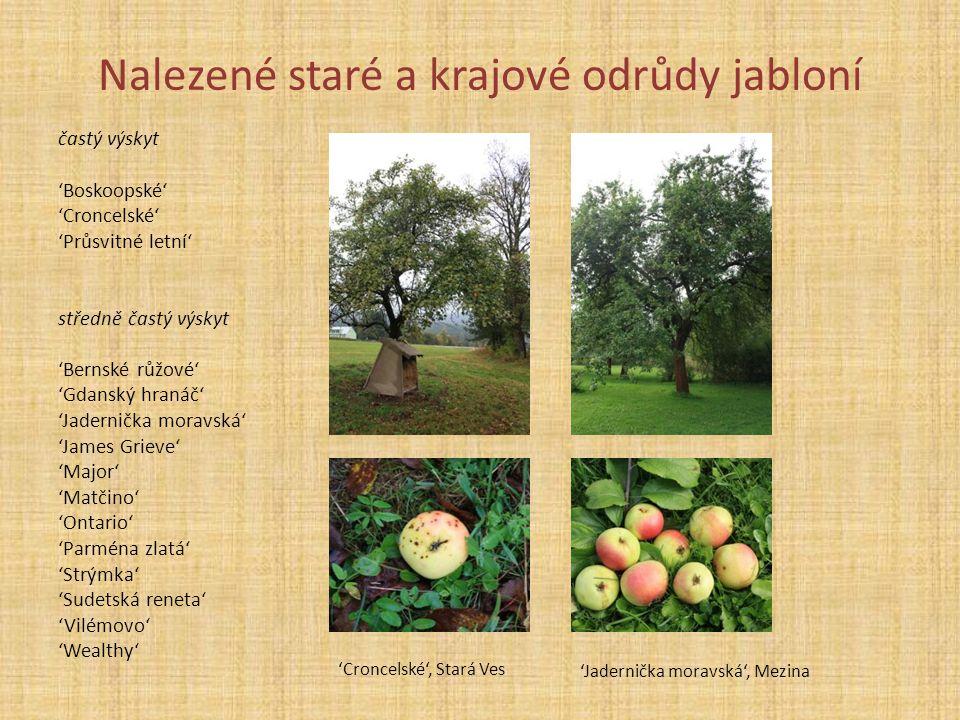 Nalezené staré a krajové odrůdy jabloní častý výskyt 'Boskoopské' 'Croncelské' 'Průsvitné letní' středně častý výskyt 'Bernské růžové' 'Gdanský hranáč