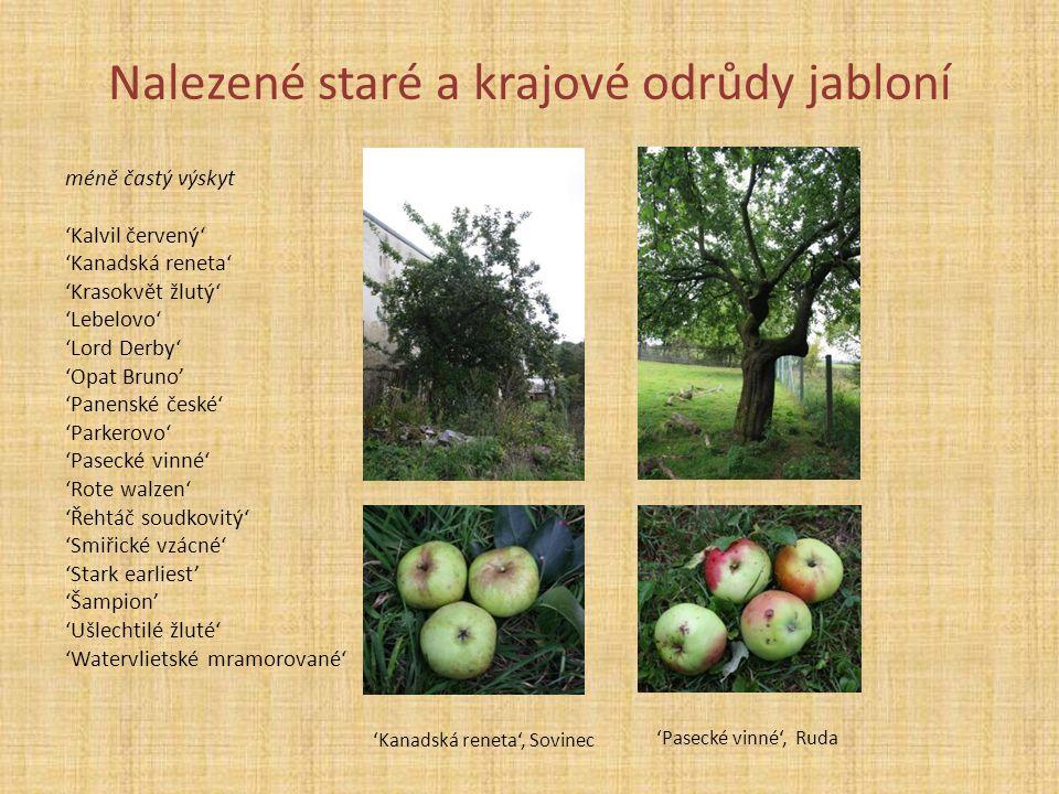 Nalezené staré a krajové odrůdy jabloní méně častý výskyt 'Kalvil červený' 'Kanadská reneta' 'Krasokvět žlutý' 'Lebelovo' 'Lord Derby' 'Opat Bruno' 'P