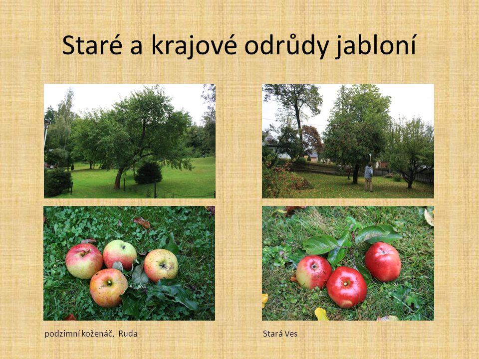 Staré a krajové odrůdy jabloní podzimní koženáč, RudaStará Ves
