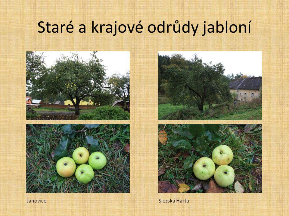 Staré a krajové odrůdy jabloní JanoviceSlezská Harta