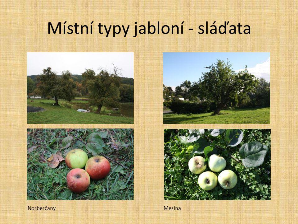 Místní typy jabloní - sláďata MezinaNorberčany