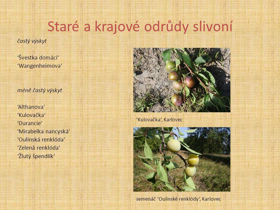 Staré a krajové odrůdy slivoní častý výskyt 'Švestka domácí' 'Wangenheimova' méně častý výskyt 'Althanova' 'Kulovačka' 'Durancie' 'Mirabelka nancyská'