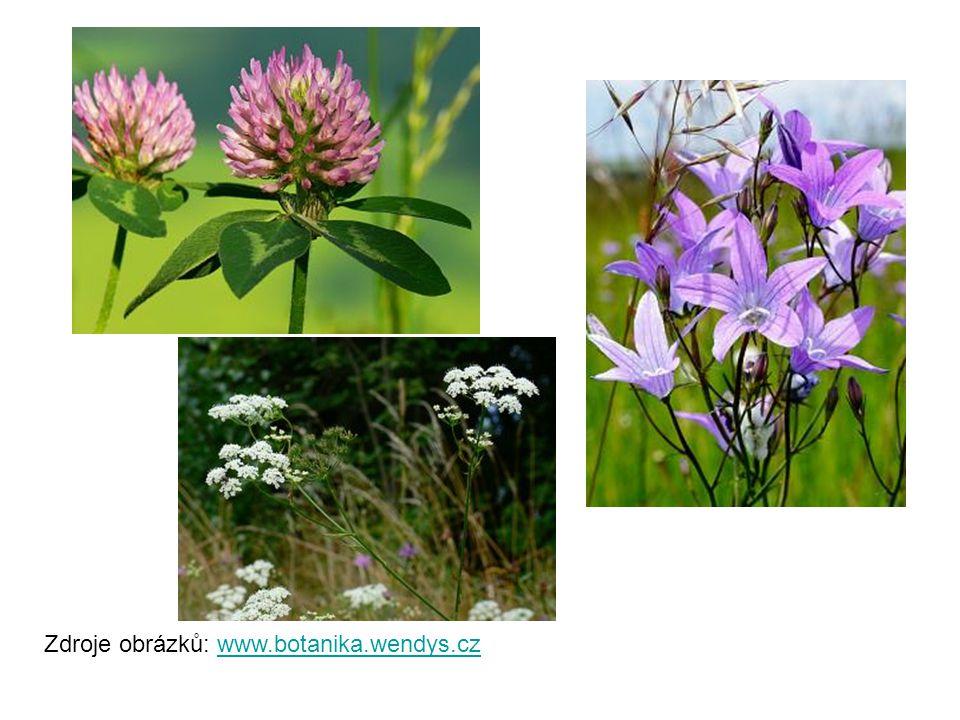 Zdroje obrázků: www.botanika.wendys.czwww.botanika.wendys.cz