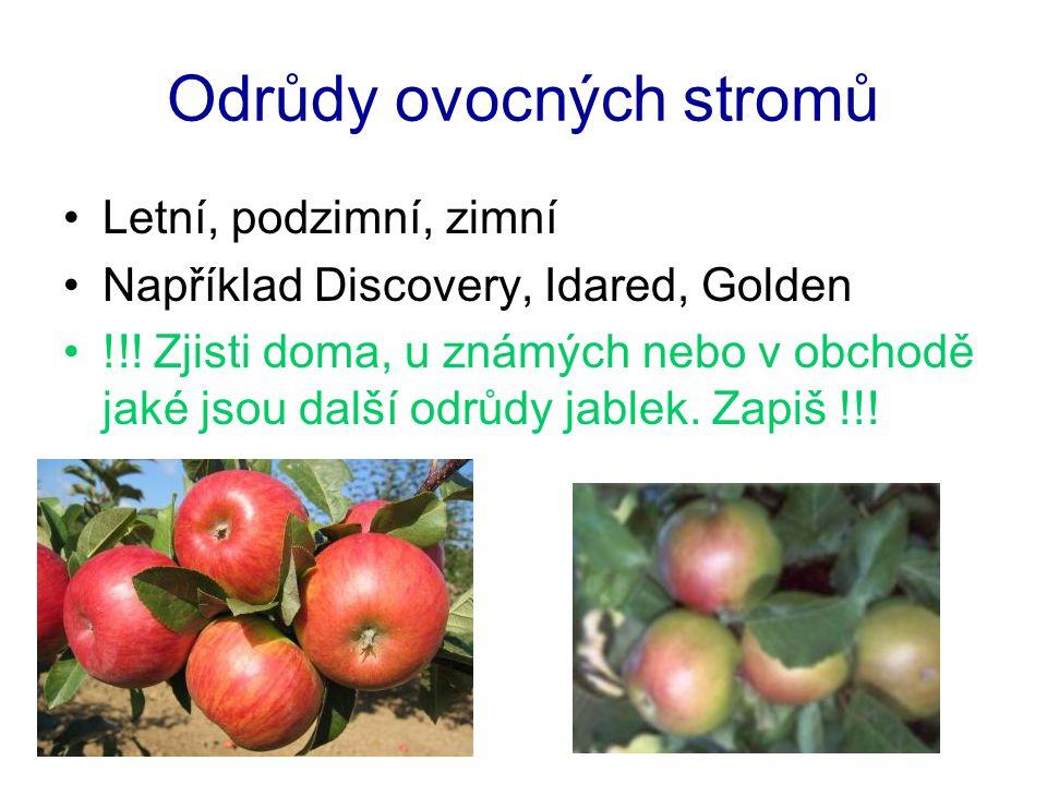 Odrůdy ovocných stromů Letní, podzimní, zimní Například Discovery, Idared, Golden !!! Zjisti doma, u známých nebo v obchodě jaké jsou další odrůdy jab