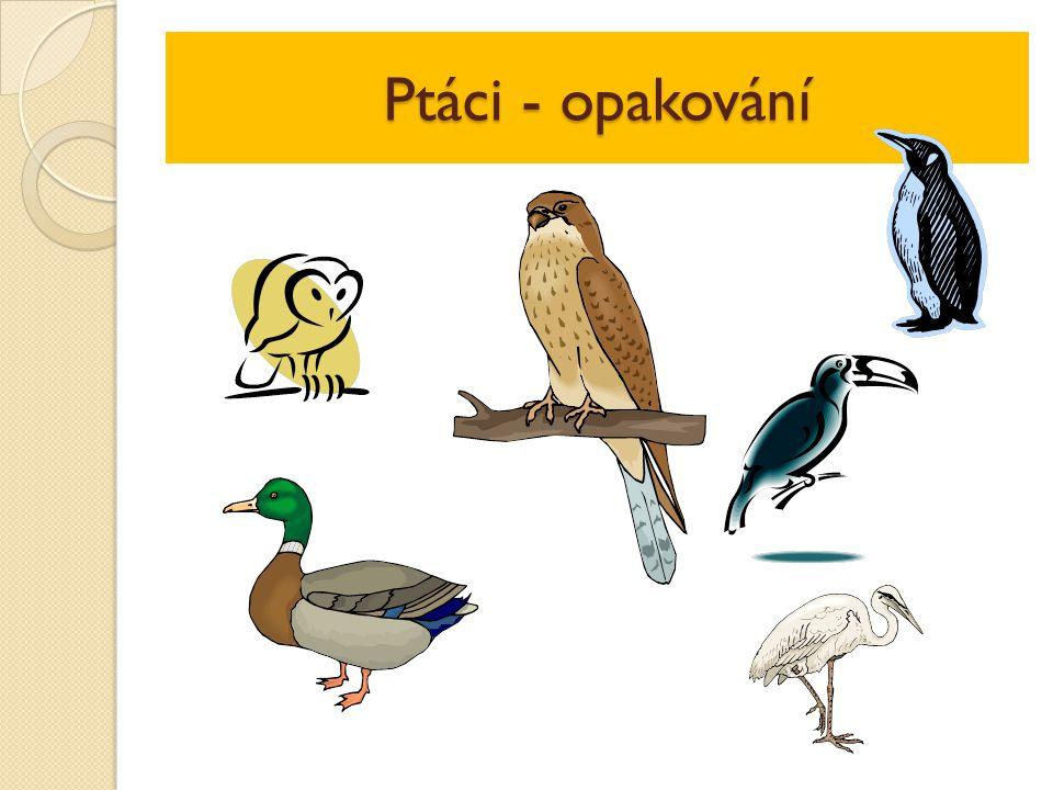 Ptáci - opakování