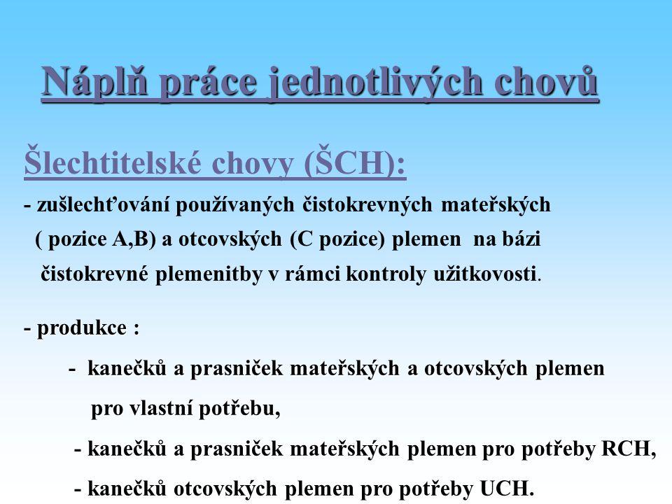 Náplň práce jednotlivých chovů Šlechtitelské chovy (ŠCH): - zušlechťování používaných čistokrevných mateřských ( pozice A,B) a otcovských (C pozice) p