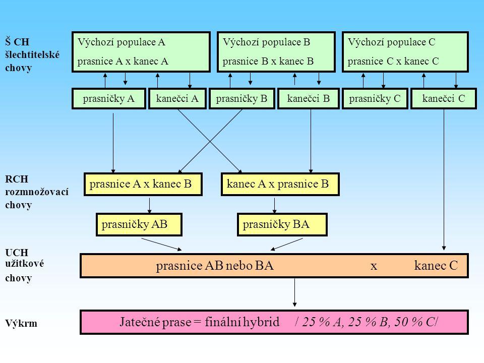 Š CH šlechtitelské chovy Výchozí populace A prasnice A x kanec A Výchozí populace B prasnice B x kanec B Výchozí populace C prasnice C x kanec C prasn