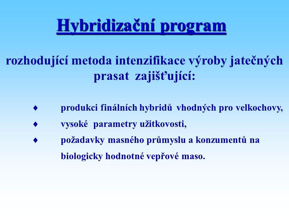 Hybridizační program rozhodující metoda intenzifikace výroby jatečných prasat zajišťující:  produkci finálních hybridůvhodných pro velkochovy,  vyso