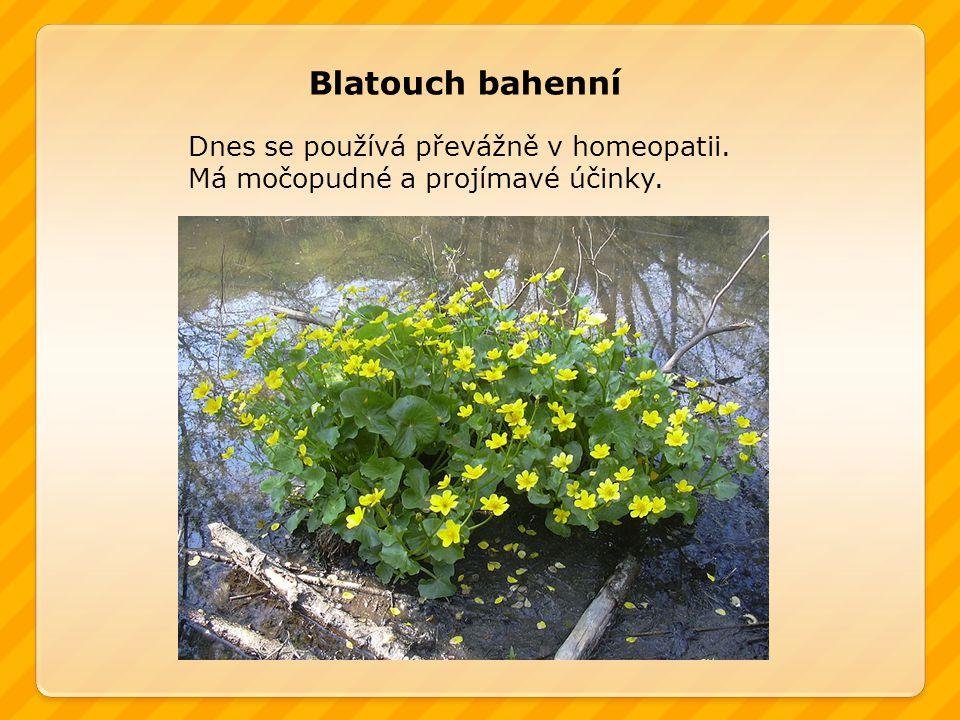 Dnes se používá převážně v homeopatii. Má močopudné a projímavé účinky. Blatouch bahenní