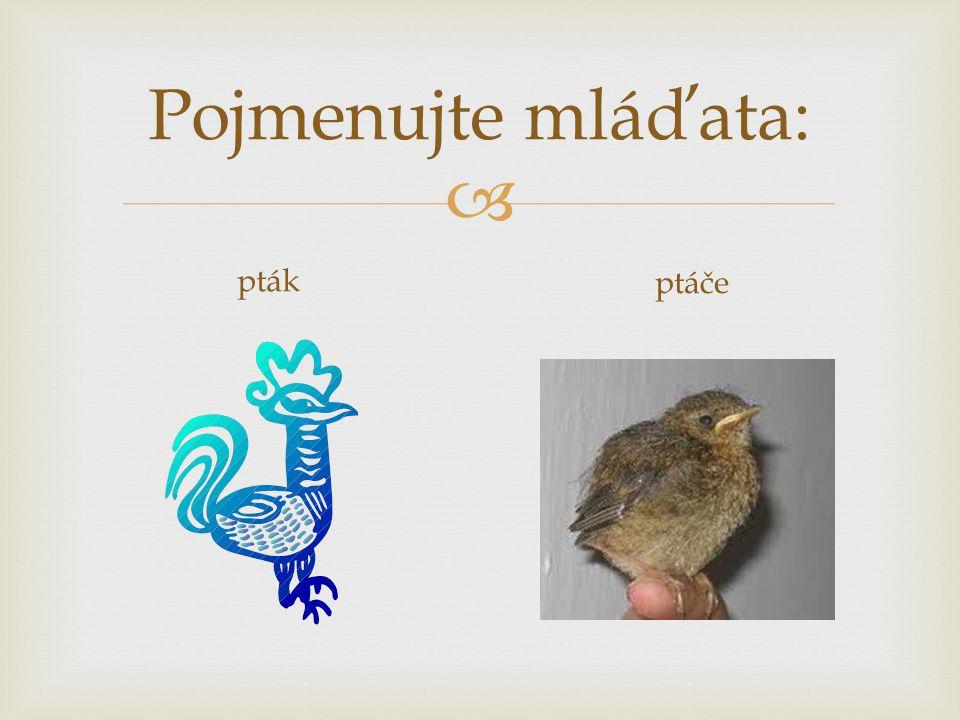  Pojmenujte mláďata: pták ptáče