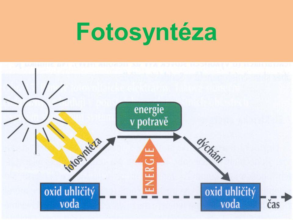 Fotosyntéza a dýchání Zázračným procesem (nazývaným fotosyntéza) zelené rostliny zachytávají sluneční záření a ukládají ho do vody a oxidu uhličitého.