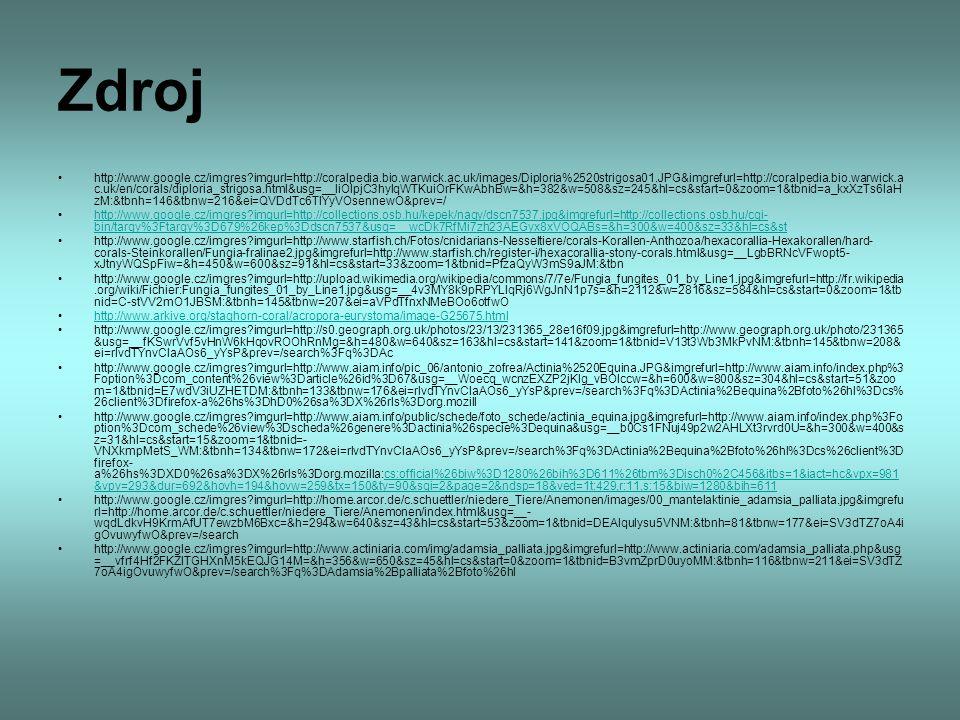 Zdroj http://www.google.cz/imgres?imgurl=http://coralpedia.bio.warwick.ac.uk/images/Diploria%2520strigosa01.JPG&imgrefurl=http://coralpedia.bio.warwic