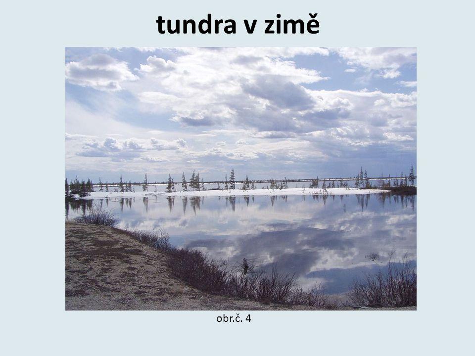 tundra v zimě obr.č. 4