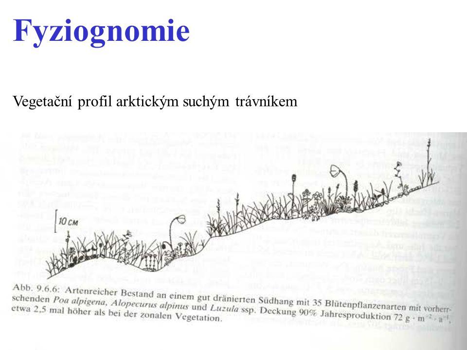 Vegetační profil arktickým suchým trávníkem Fyziognomie