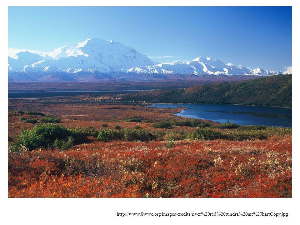 Historie - fosilní nálezy tundrových rostlin – 3 miliony let - ve třetihorách dnešní tundra byla pokryta lesem - během glaciálů byla tundra zaledněna, s výjimkou částí Aljašské tundry (proto je druhově nejbohatší).
