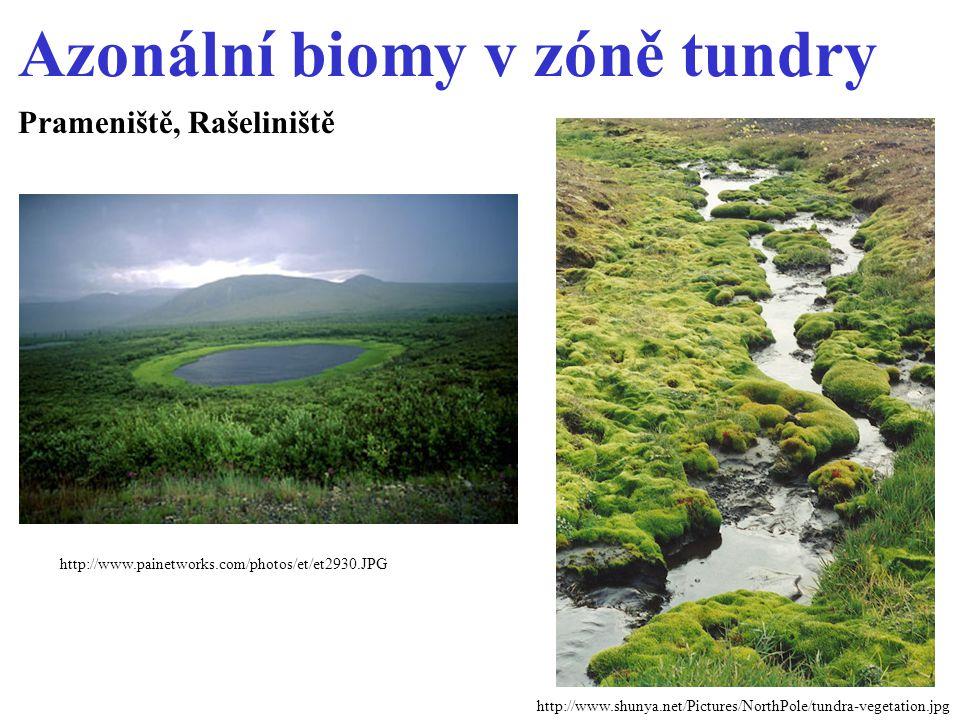 Azonální biomy v zóně tundry Prameniště, Rašeliniště http://www.shunya.net/Pictures/NorthPole/tundra-vegetation.jpg http://www.painetworks.com/photos/et/et2930.JPG