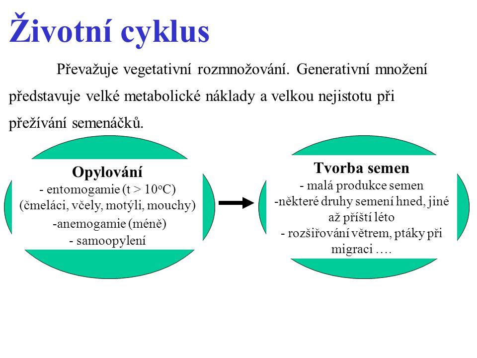 Životní cyklus Převažuje vegetativní rozmnožování.