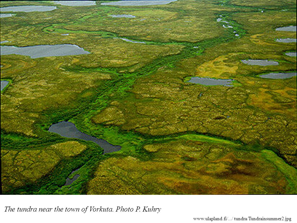 Lišejníková tundra (je sušší než mechová tundra) Foto: jižní Island Fyziognomie