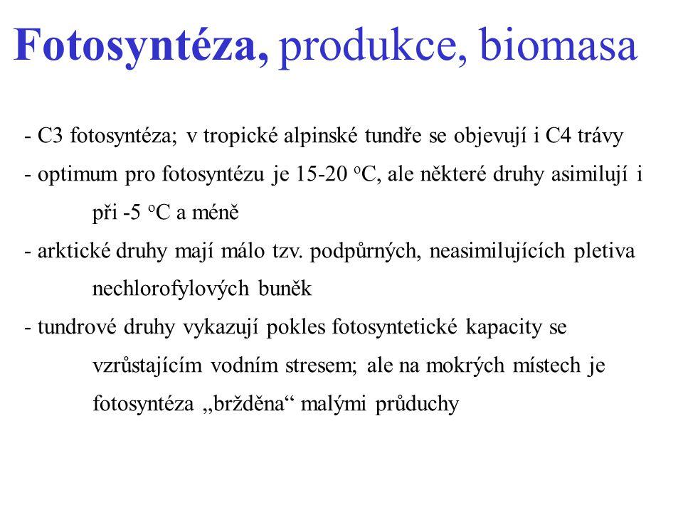 Fotosyntéza, produkce, biomasa - C3 fotosyntéza; v tropické alpinské tundře se objevují i C4 trávy - optimum pro fotosyntézu je 15-20 o C, ale některé druhy asimilují i při -5 o C a méně - arktické druhy mají málo tzv.