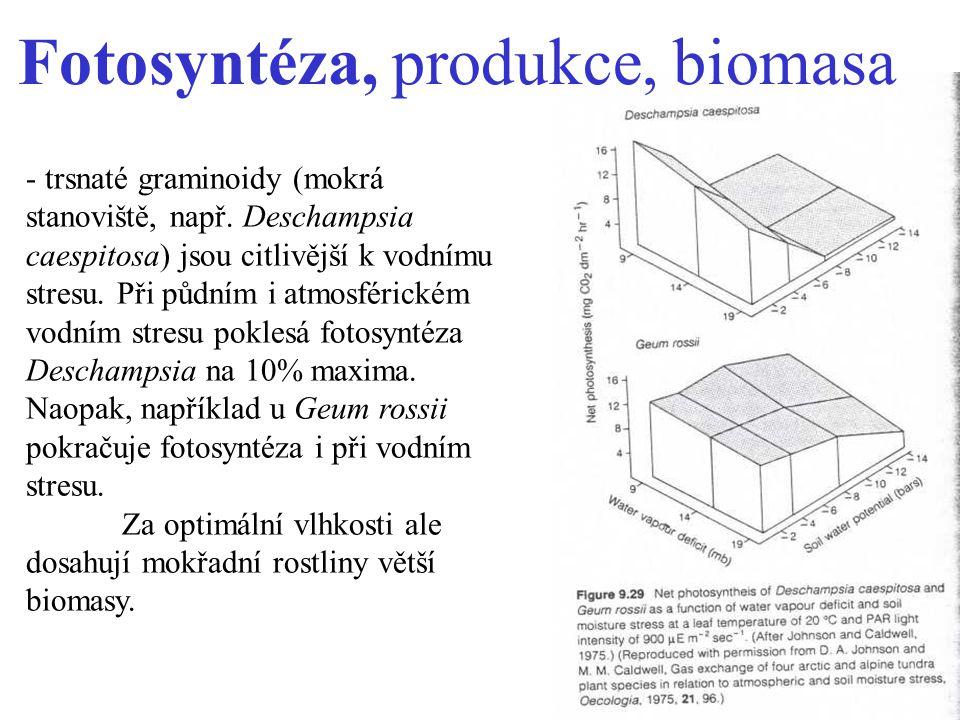 Fotosyntéza, produkce, biomasa - trsnaté graminoidy (mokrá stanoviště, např.