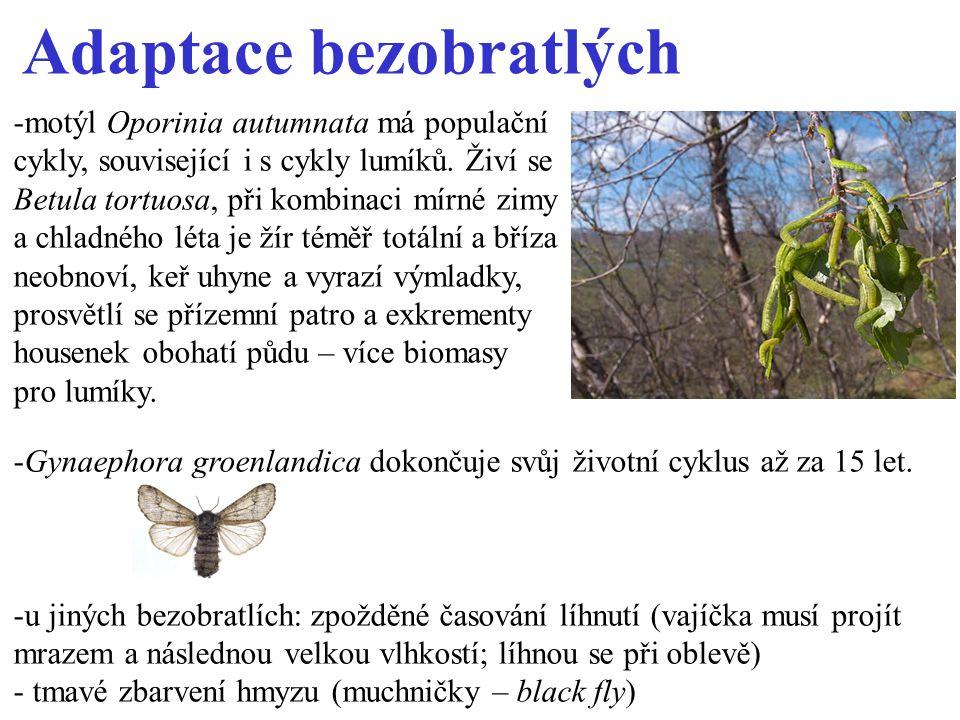 Adaptace bezobratlých -Gynaephora groenlandica dokončuje svůj životní cyklus až za 15 let.