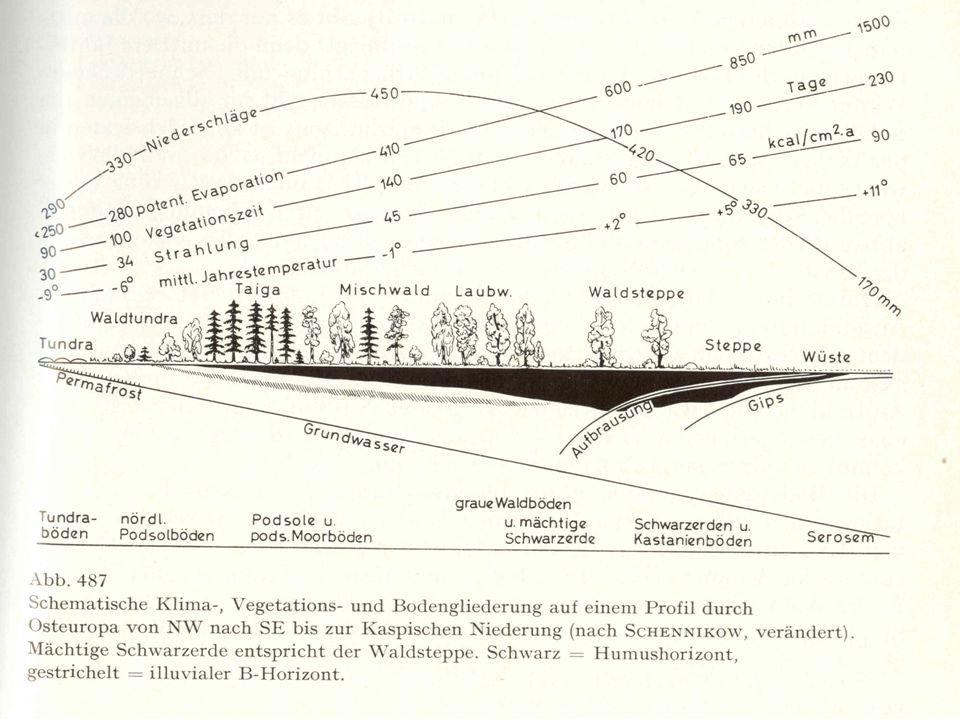 Půdy Rašelinné půdy Kryosoly - velká vrstva opadu (pomalá dekompozice) nasedá na oglejený až glejový horizont.