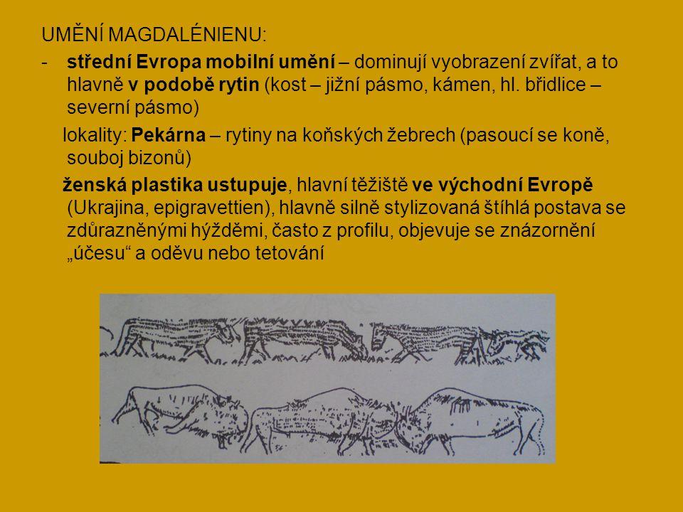 UMĚNÍ MAGDALÉNIENU: -střední Evropa mobilní umění – dominují vyobrazení zvířat, a to hlavně v podobě rytin (kost – jižní pásmo, kámen, hl. břidlice –