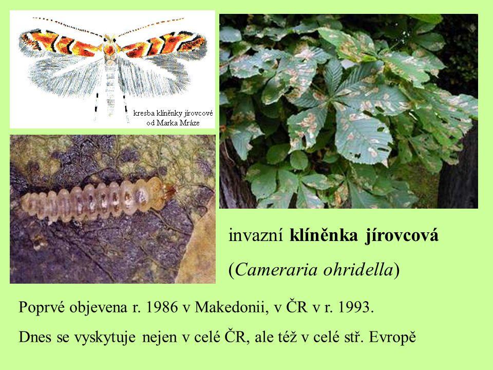 invazní klíněnka jírovcová (Cameraria ohridella) Poprvé objevena r. 1986 v Makedonii, v ČR v r. 1993. Dnes se vyskytuje nejen v celé ČR, ale též v cel