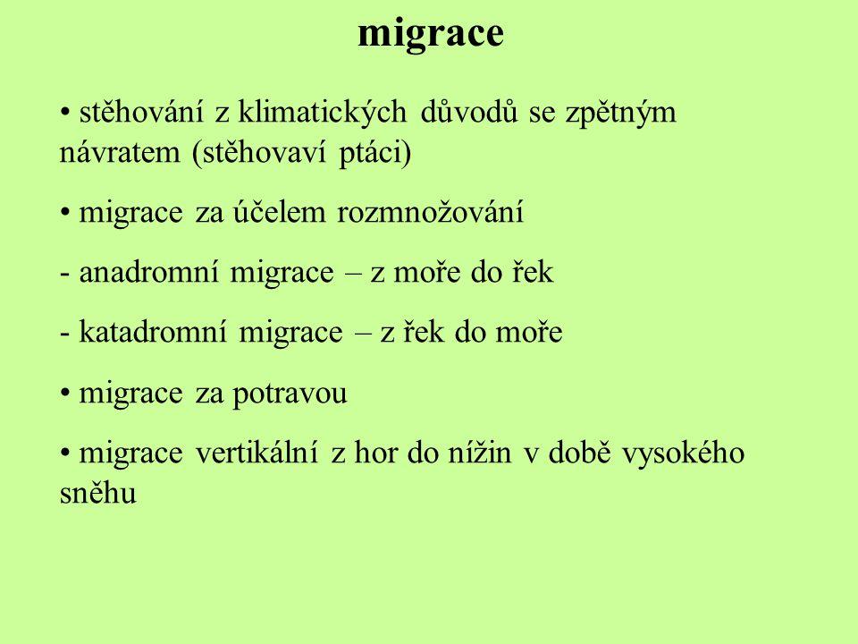migrace stěhování z klimatických důvodů se zpětným návratem (stěhovaví ptáci) migrace za účelem rozmnožování - anadromní migrace – z moře do řek - kat