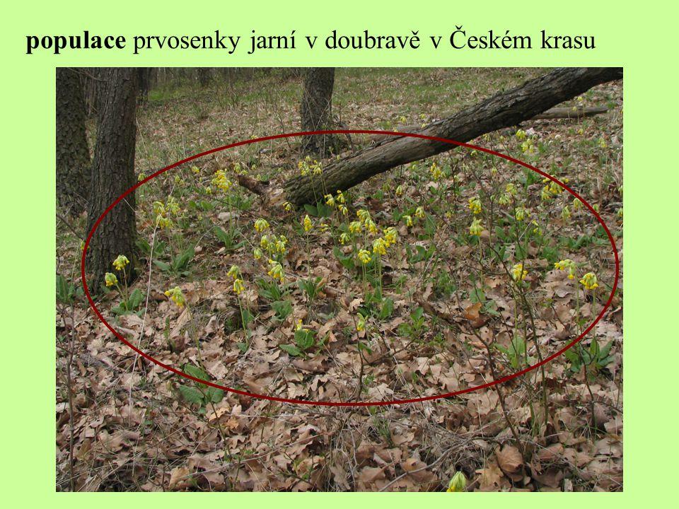 populace běláska zelného na louce kukla – housenka – dospělý motýl
