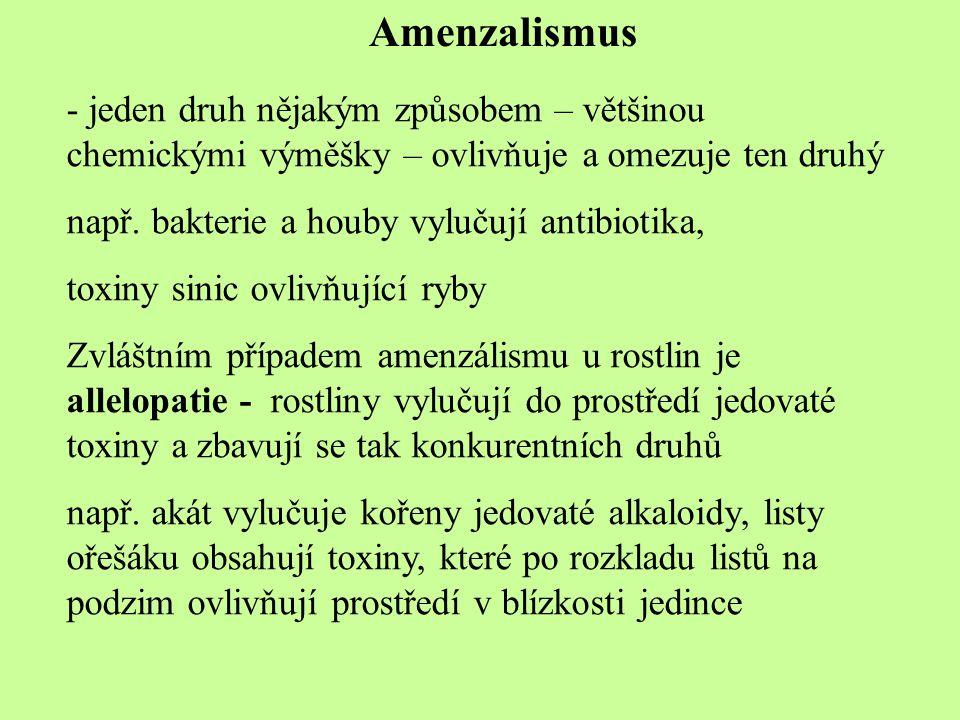 Amenzalismus - jeden druh nějakým způsobem – většinou chemickými výměšky – ovlivňuje a omezuje ten druhý např. bakterie a houby vylučují antibiotika,