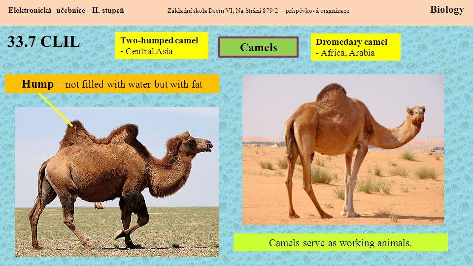 33.7 CLIL Elektronická učebnice - II. stupeň Základní škola Děčín VI, Na Stráni 879/2 – příspěvková organizace Biology Camels Two-humped camel - Centr