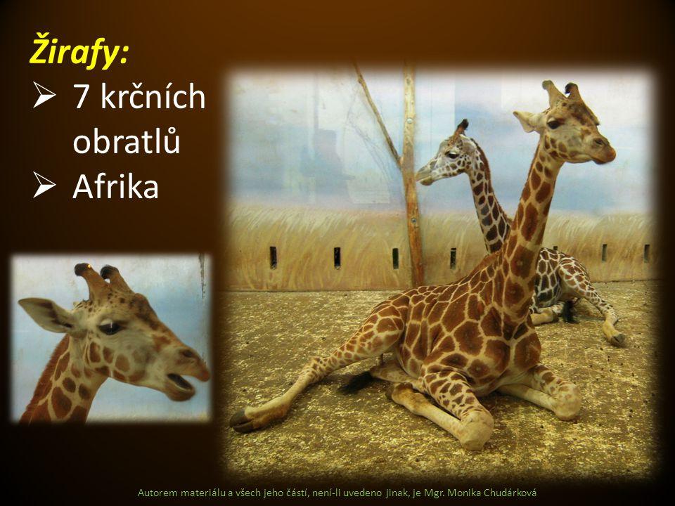Autorem materiálu a všech jeho částí, není-li uvedeno jinak, je Mgr. Monika Chudárková Žirafy:  7 krčních obratlů  Afrika
