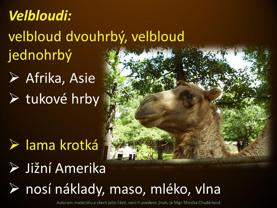 Autorem materiálu a všech jeho částí, není-li uvedeno jinak, je Mgr. Monika Chudárková Velbloudi: velbloud dvouhrbý, velbloud jednohrbý  Afrika, Asie