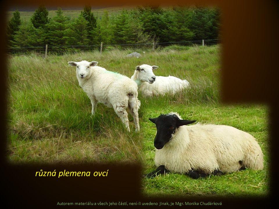Autorem materiálu a všech jeho částí, není-li uvedeno jinak, je Mgr. Monika Chudárková různá plemena ovcí