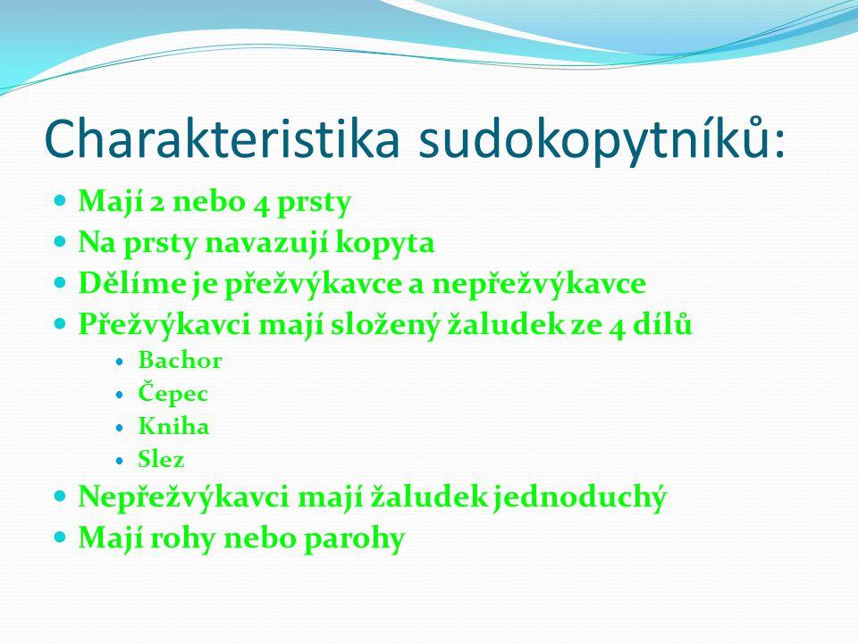 Charakteristika sudokopytníků: Mají 2 nebo 4 prsty Na prsty navazují kopyta Dělíme je přežvýkavce a nepřežvýkavce Přežvýkavci mají složený žaludek ze