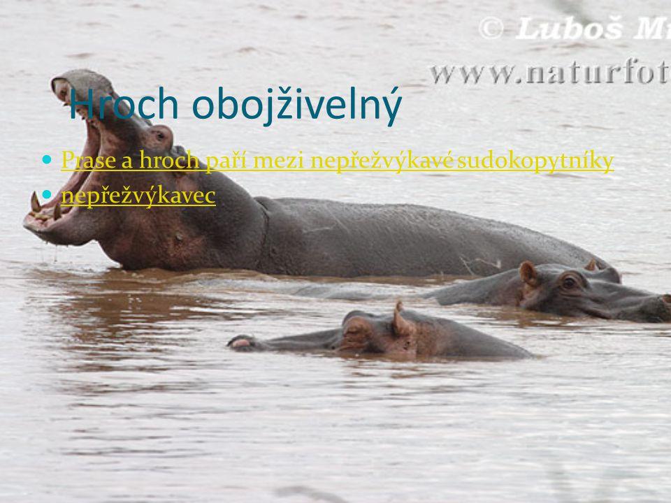 Sob polární http://www.naturfoto.cz/