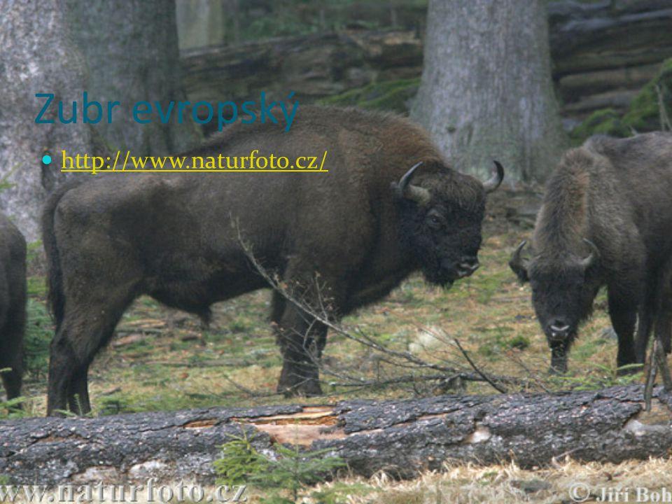 Lama (Jižní Amerika) Chová se pro srst a kůži Chybí ji část žaludku - kniha