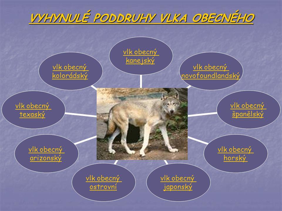 VYHYNULÉ PODDRUHY VLKA OBECNÉHO vlk obecný kanejský vlk obecný novofoundlandský vlk obecný španělský vlk obecný horský vlk obecný japonský vlk obecný ostrovní vlk obecný arizonský vlk obecný texaský vlk obecný kolorádský
