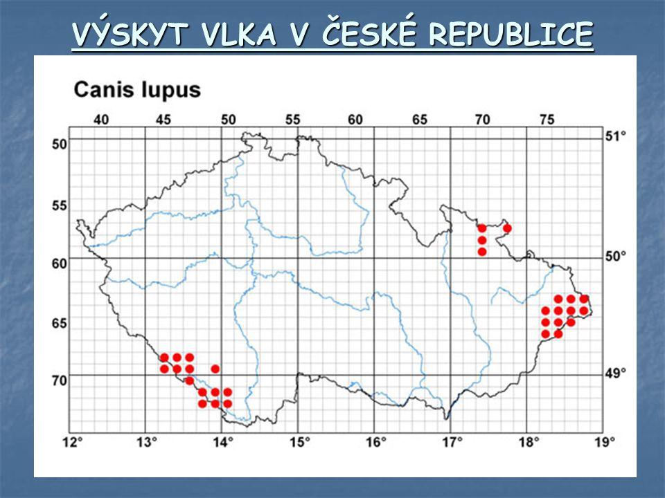 VÝSKYT VLKA V ČESKÉ REPUBLICE