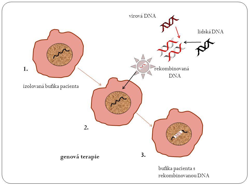 virová DNA lidská DNA rekombinovaná DNA 1. 2. 3.