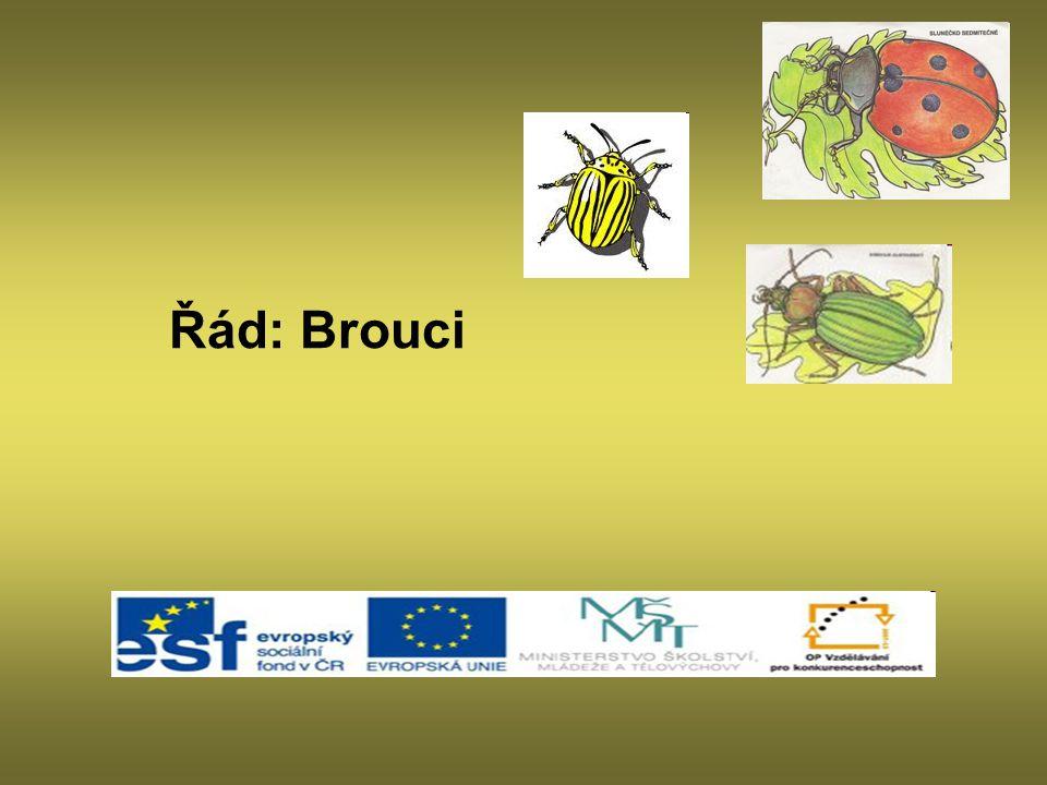 Zdroj http://zooola.webgarden.cz/image/2489180 http://www.biolib.cz/cz/taxonimage/id10670/?taxonid=10814 http://cs.wikipedia.org/wiki/Soubor:Lady_beetle_taking_flight.jpg http://fotoalba.centrum.cz/~GUEST~/photo.php?pid=19994001&row=w%3Dpl%26uid%3D10318098%26aid%3D1939593%26cid%3D0%26sort% http://www.biolib.cz/cz/taxonimage/id78342/?taxonid=10869 http://www.biolib.cz/cz/taxonimage/id93086/?taxonid=10881 http://en.wikipedia.org/wiki/File:Coccinellidae_%28Ladybug%29_Anatomy.svg http://www.naturabohemica.cz/carabus-cancellatus/ http://www.biolib.cz/cz/taxonimage/id104165/?taxonid=18&type=1 http://www.google.cz/imgres?imgurl=http://www.muckstein.com/galerie/albums/brouci/Carabus_auronitens_IMG_0728_JPG.jpg&imgrefurl=http://www.muckstein.com/gale rie/displayimage-1367.html&usg=__xwDmRX3m5Xxg22L-edxi9iaAiBg=&h=631&w=847&sz=93&hl=cs&http://www.google.cz/imgres?imgurl=http://www.muckstein.com/galerie/albums/brouci/Carabus_auronitens_IMG_0728_JPG.jpg&imgrefurl=http://www.muckstein.com/gale rie/displayimage-1367.html&usg=__xwDmRX3m5Xxg22L-edxi9iaAiBg=&h=631&w=847&sz=93&hl=cs& http://www.biolib.cz/cz/taxonimage/id142319/?taxonid=80 http://www.biolib.cz/cz/taxonimage/id36885/?taxonid=3661 http://www.google.cz/imgres?imgurl=http://nd03.jxs.cz/324/056/2eae9f4440_65579140_o2.jpg&imgrefurl=http://coleoptera2.blog.cz/en&usg=__ROMDkaEPvHV7- hRhSQwo7UyoqWI=&h=687&w=611&sz=264&hl=cs&start=0&zoom=1&tbnid=VA7cUJ554Xr2XM:&tbnh=163&tbnw=145&ei=mxG3TYfWE4_KtAaivtjPD http://www.biolib.cz/cz/taxonimage/id107088/?taxonid=8100 http://www.biolib.cz/cz/taxonimage/id4652/ http://www.google.cz/imgres?imgurl=http://nd01.jxs.cz/118/957/7eafe3da81_47053990_o2.jpg&imgrefurl=http://blogplnyzvirat.blog.cz/0906&usg=___reWhCaeJHCZs55u BzXPPUjQDuQ=&h=250&w=350&sz=28&hl=cs&start=15&zoom=1&tbnid=K-3XYpCgmdn09M:&tbnh=150&tbnw=200&ei=_xu3 http://www.google.cz/imgres?imgurl=http://4.bp.blogspot.com/_kh0ZDVRpwIk/SIiGfd1AcAI/AAAAAAAAAPY/Cqgc7SqcaZg/s320/P1090527.JPG&imgrefurl=http://www.google.cz/imgres?imgurl=htt