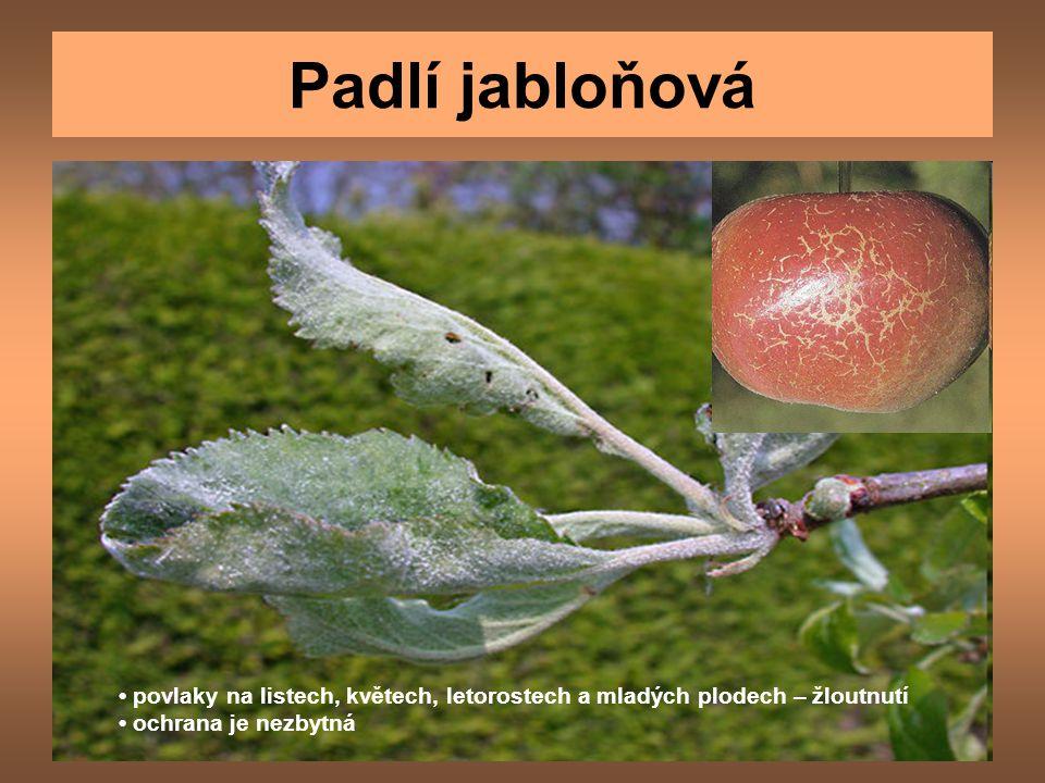 Padlí jabloňová povlaky na listech, květech, letorostech a mladých plodech – žloutnutí ochrana je nezbytná