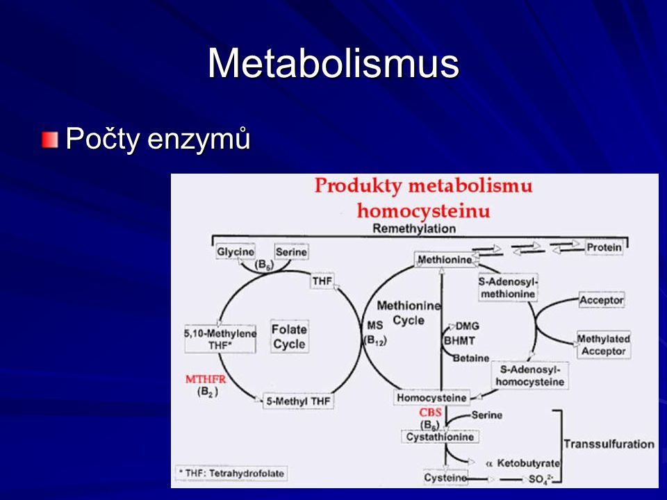Metabolismus Počty enzymů