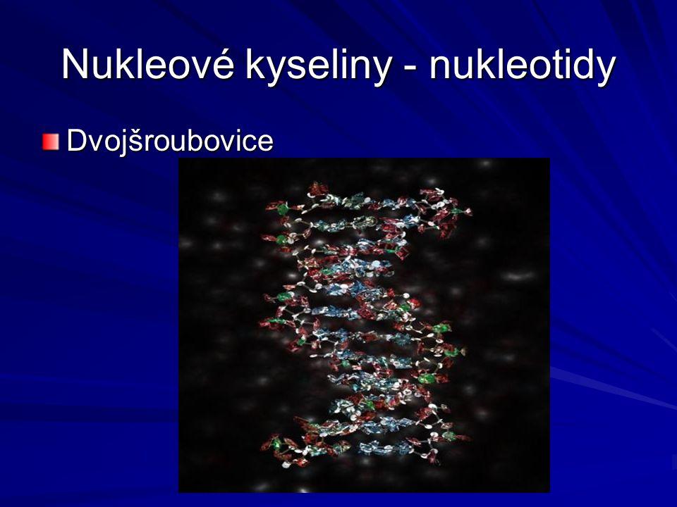 Nukleové kyseliny - nukleotidy Dvojšroubovice