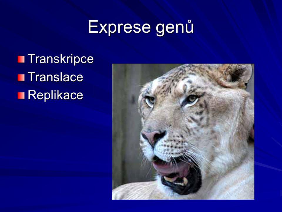 Exprese genů TranskripceTranslaceReplikace